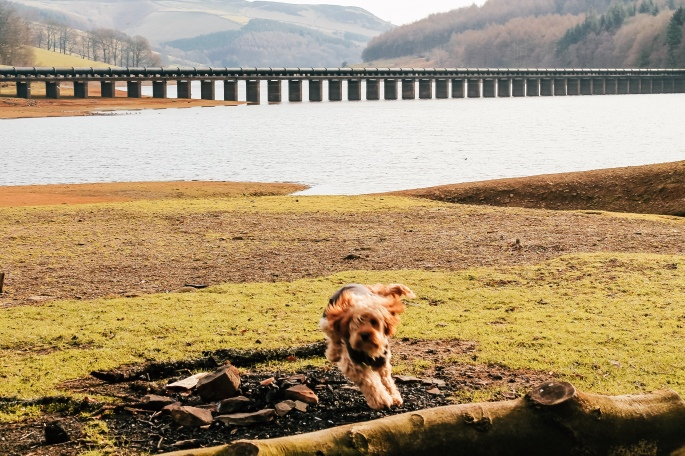 Trixie at Lady Bower Reservoir